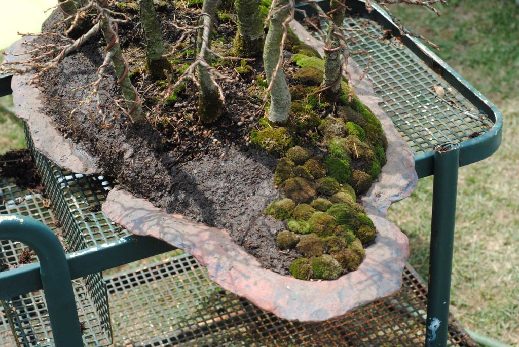 This picture shows the mucked perimeter (left) and the slowly progressing moss job.