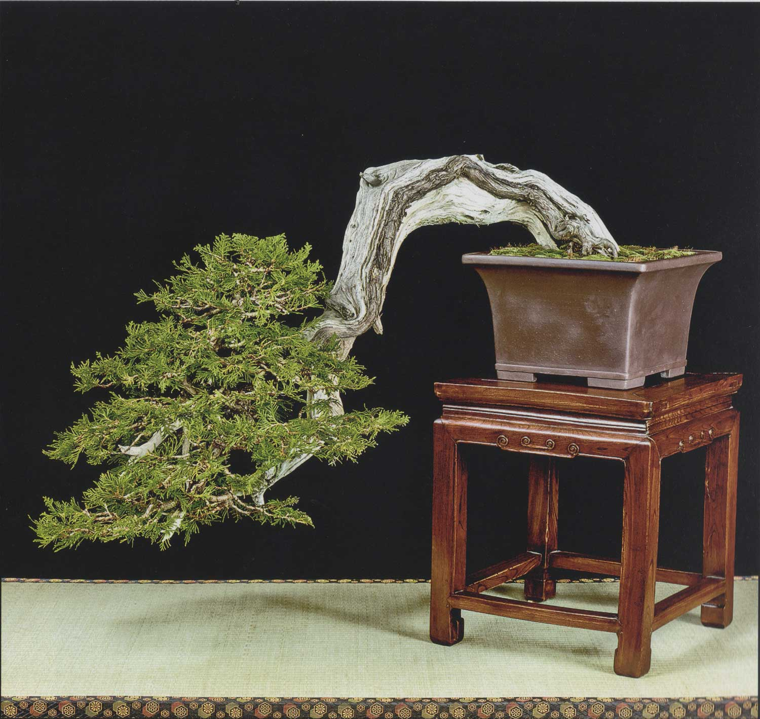 Incredible Thuja occidentalis by David J. of the Toronto Bonsai Society.  David custom made a support system to safely transport this tree to Rochester.