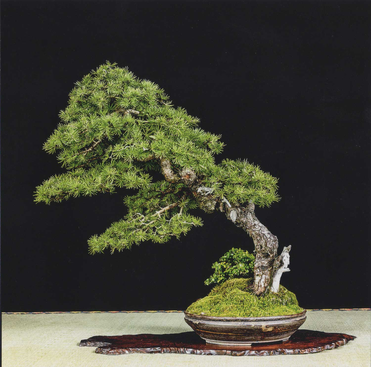 "Larix laricina by Brian Donnelley. An elegant tree  which really gives the viewer a ""sense of place""."